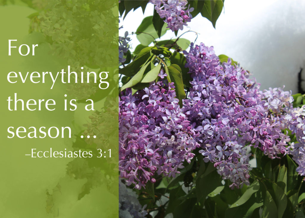 """""""For everything there is a season ..."""" -Ecclesiastes 3:1"""